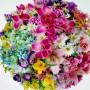 bukiet-kula-kwiatow